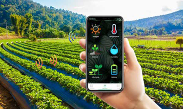 IoT sensors crucial in solving the issues of farming.