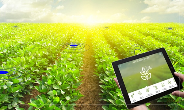 Installed IoT sensors on the farm undergo ongoing health checks